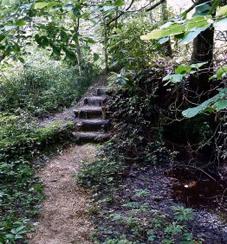 Hiking Trail Steps
